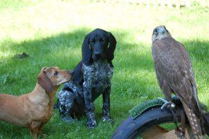 Nicht nur Beizvögel sind Thema beim Falknerschein Kurs